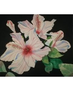 Three pink hibiscus flowers in watercolour with a black background.