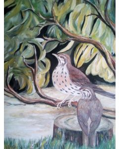 Two Song Thrushes