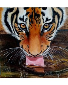 Young Tiger drinks Water