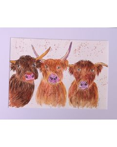 Three Different Highland Cows