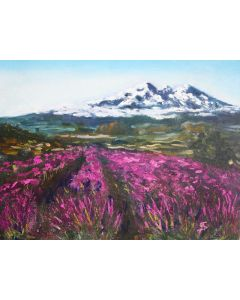 LAVENDER FIELDS AND MOUNTAINS