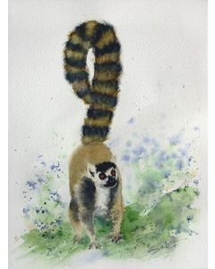 Lemur I ... Animals ... Cat... Animal portrait... Wildlife