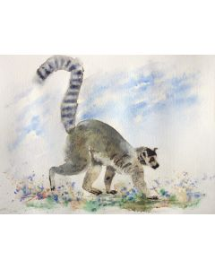 Lemur II ... Animals ... Cat... Animal portrait... Wildlife