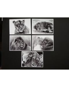 Lion Painting Greeting Cards set of 5
