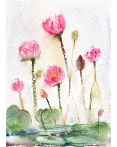 Water lilies pond lotus pond watercolour painting