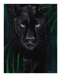 Big Cats Collection - Panther