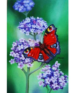 PEACOCK BUTTERFLY ON VERBENA 5 X 7.5 INCH