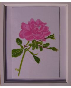 Pink Rose with two buds.