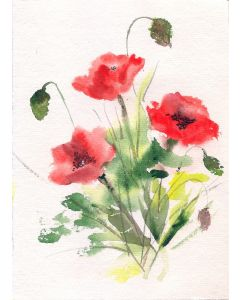 Three Red poppies watercolour painting