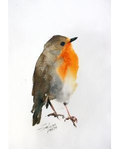 ROBIN II - BIRD PORTRAIT