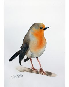ROBIN III - BIRD PORTRAIT