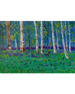 Silver Birch Trees in a Pretty Bluebell Wood