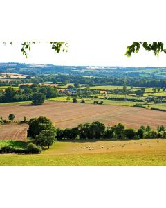 Summer in Rural Hampshire