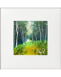 Seasons - Spring Silver Birch Clearing