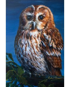 Tawny Owl Moonlight