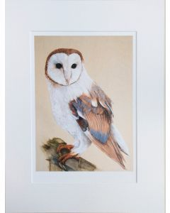 The Barn Owl Limited Edition Print