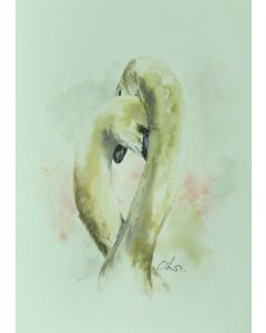 Two Swans, Original Watercolour Painting.