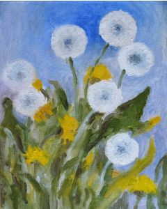 White and Yellow Dandelions 8x10inches