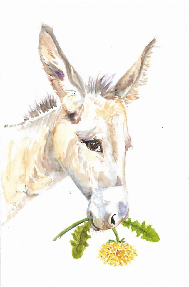 Sweet donkey with a dendelion flower