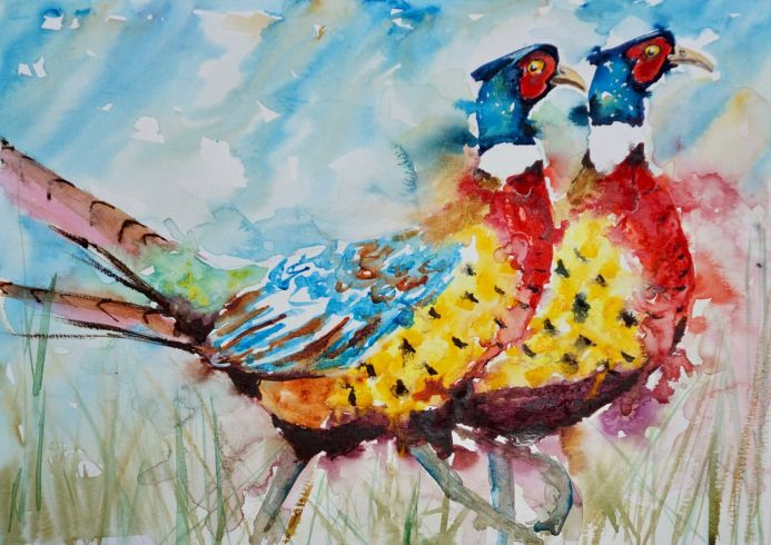 Pheasants Strutting their Stuff