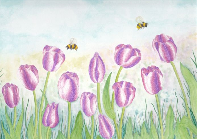 Purple striped Tulips and Bees