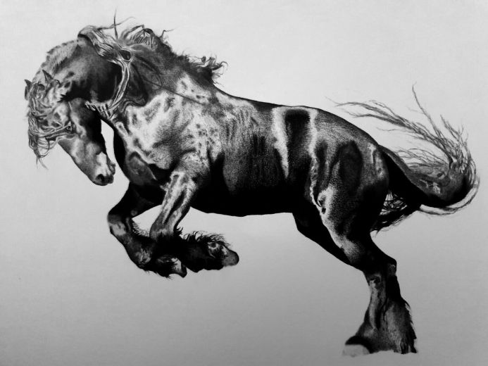 Black Stallion Horse Drawing 16x12