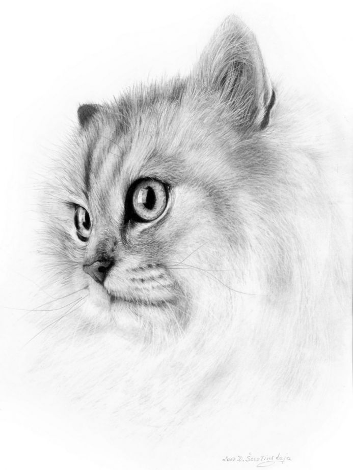 The Look (Limited Edition Print)