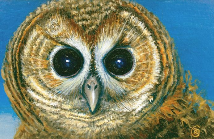 Portrait of an Owl, a handsome bird with remarkable eyes