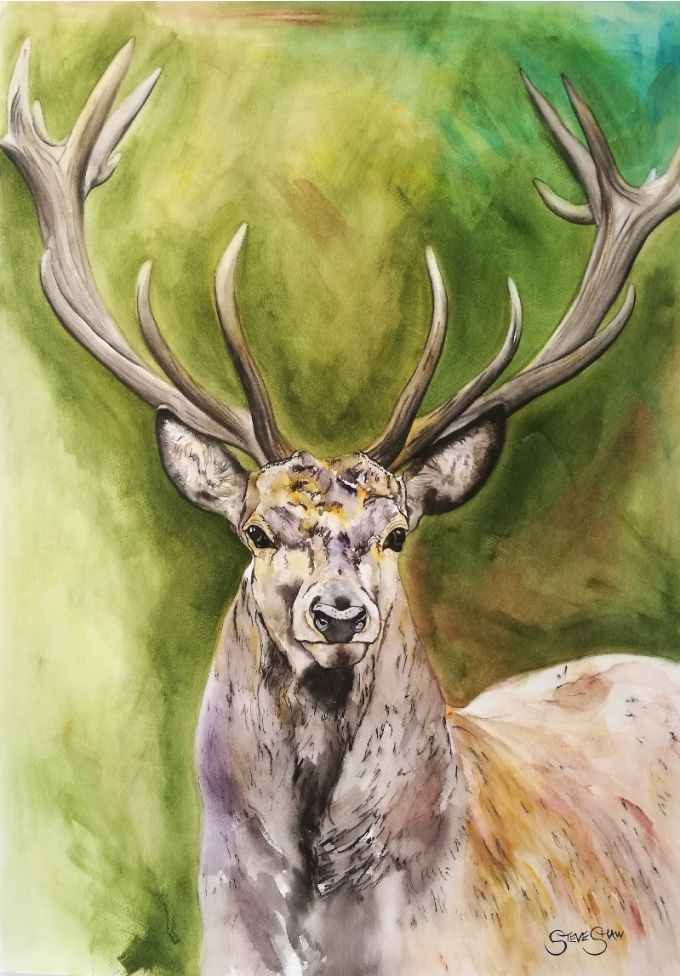 Dignified Being. Watercolour Stag painting on paper. 42cm x 59.4cm. Free Worldwide Shipping.