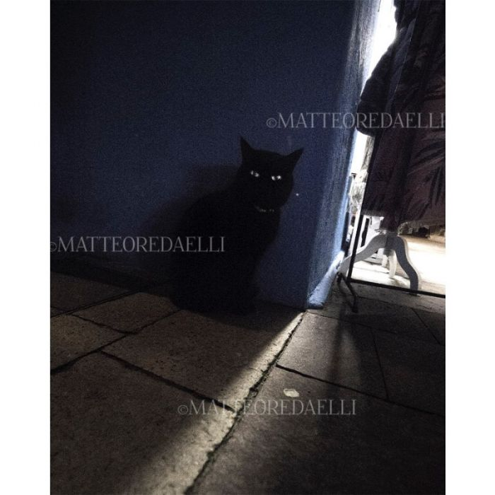 Venetian Cat - Limited Edition (35 editions)