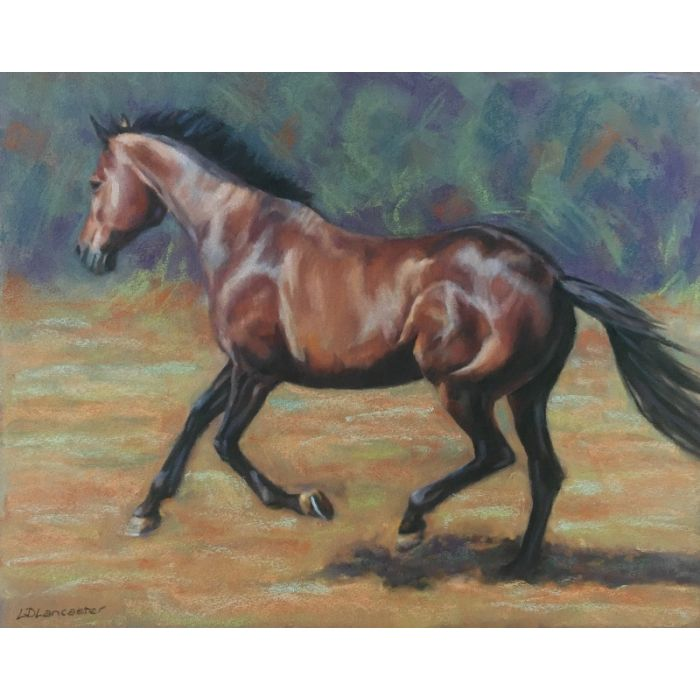 Bay Horse Cantering in field