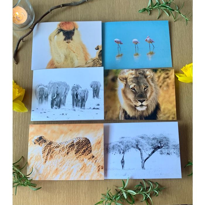 African wildlife greeting cards