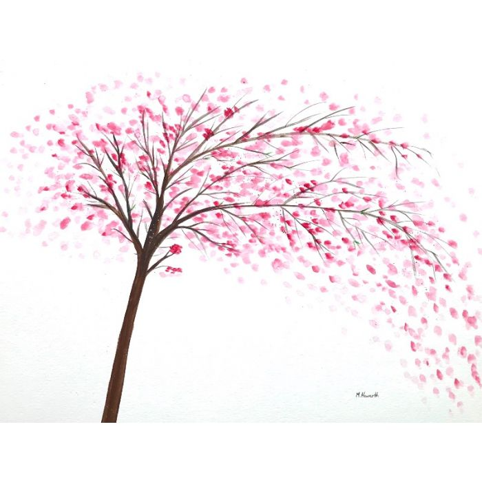 Cherry blossoms tree 16x12