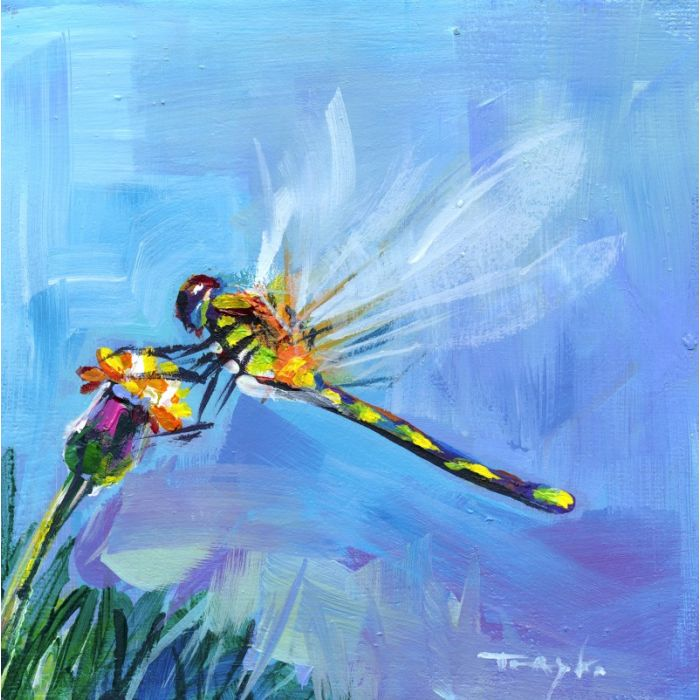 Dragonfly. Flowers, Meadow