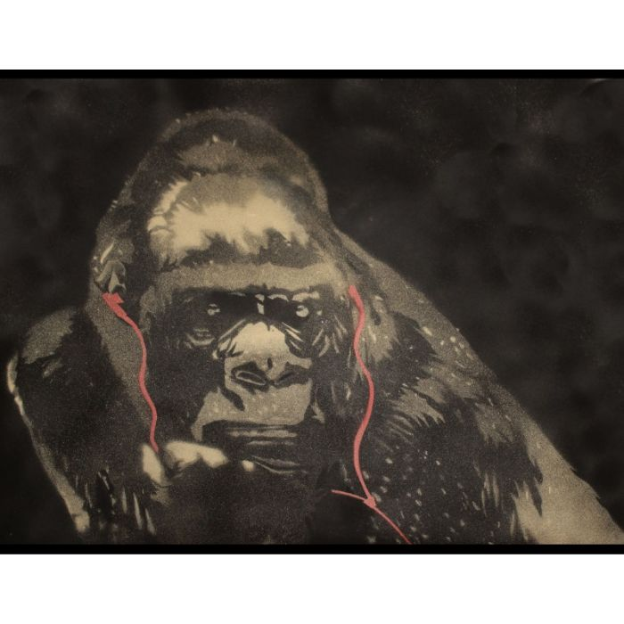 Gorilla in the groove (ON THE DAILY TELEGRAPH).