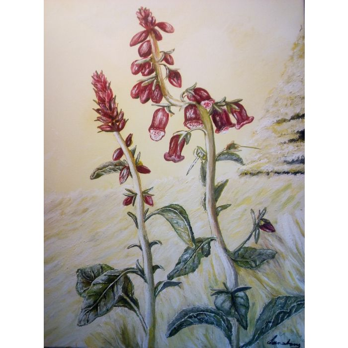 Foxglove In Golden Field
