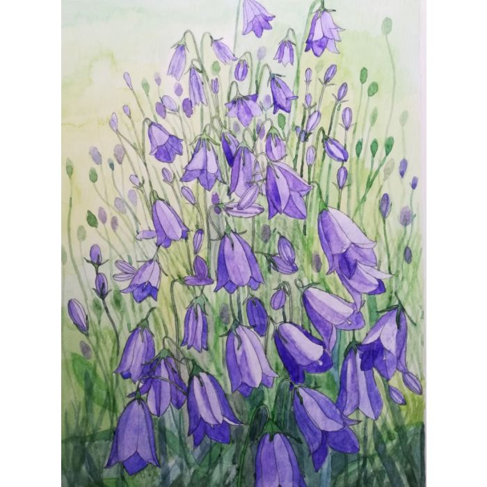 Watercolor purple blue harebells with green background.