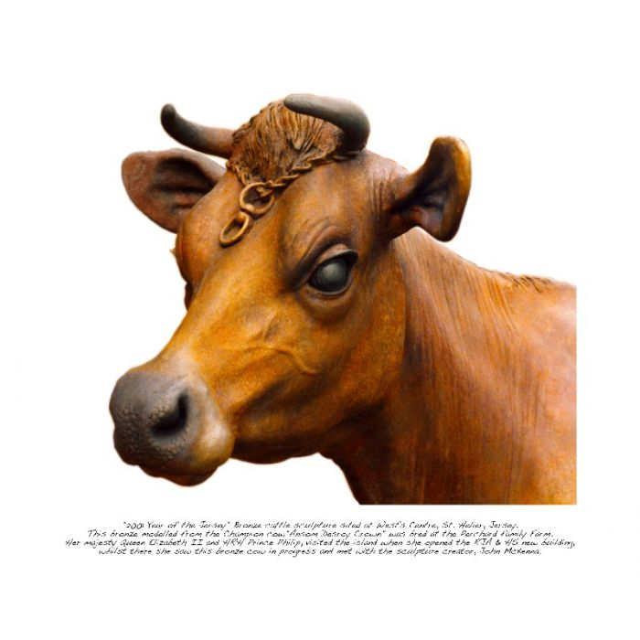 Jersey Cow Sculpture print - the  bronze Cow that met the Queen - (limited edition of 150 prints)
