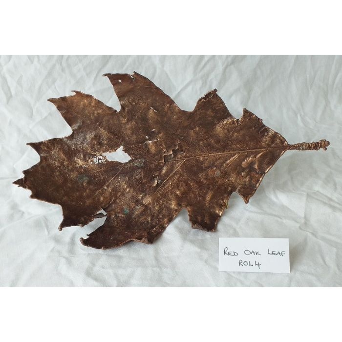 Extra Large Red Oak Leaf Electroformed In Copper