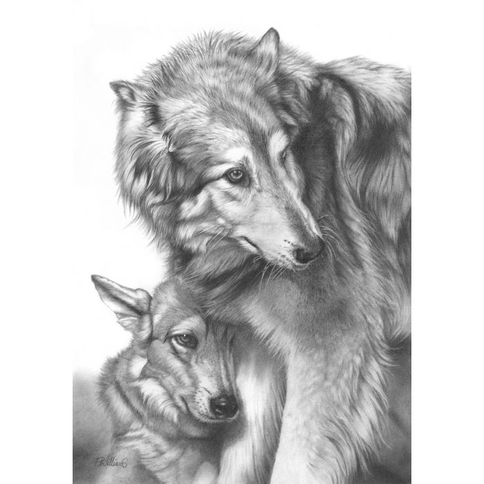 She Wolf pencil drawing