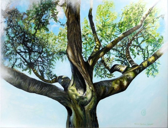 Cry From the Heart - In Memoriam of a Very Special Tree From Pontefract