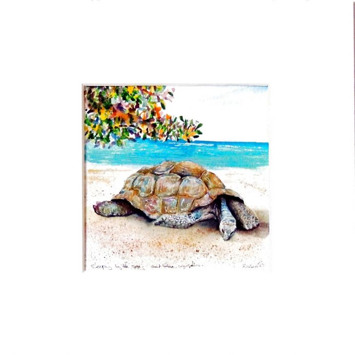 'Sleeping by the Sea' Land Tortoise