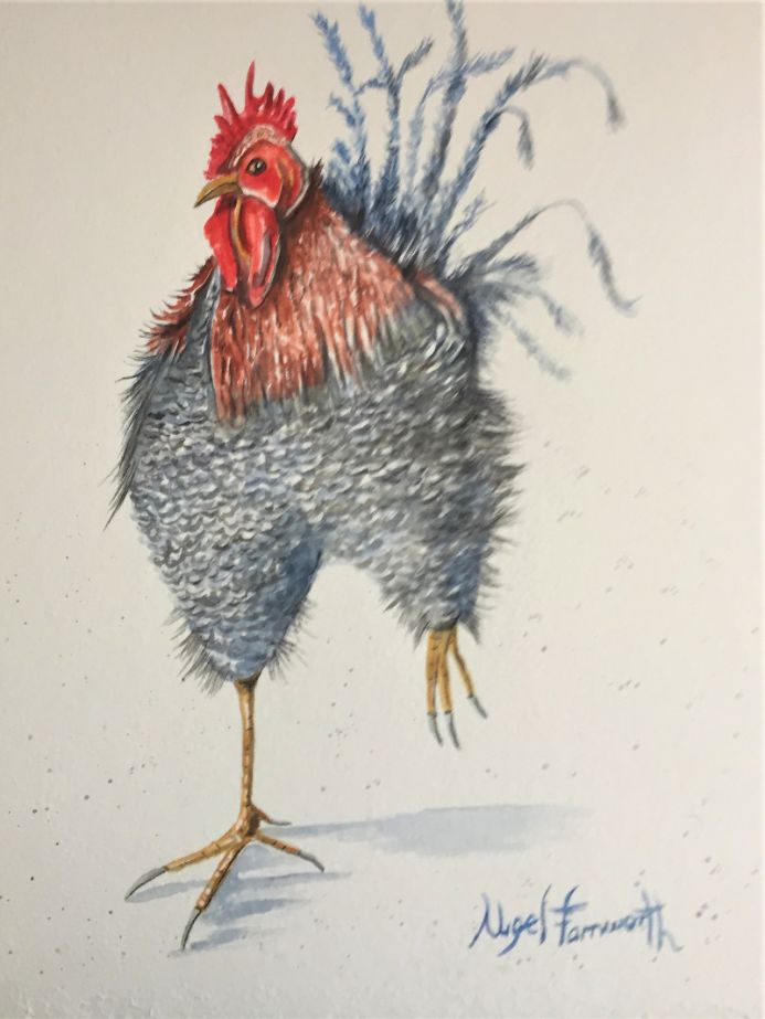 The Angry Hen