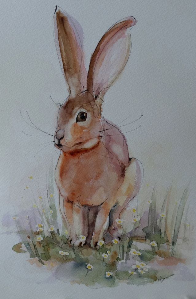 Baby faced Hare
