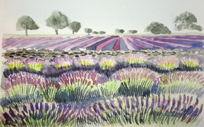 Harsh lines Graphic style lavender fields