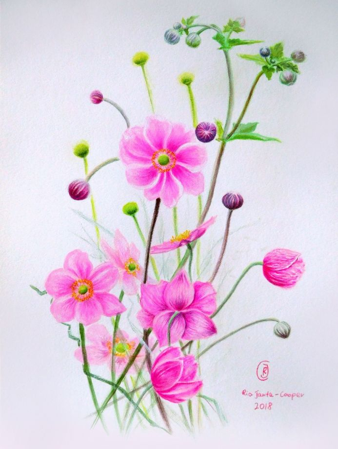 Botanical Study of Japanese Anemone