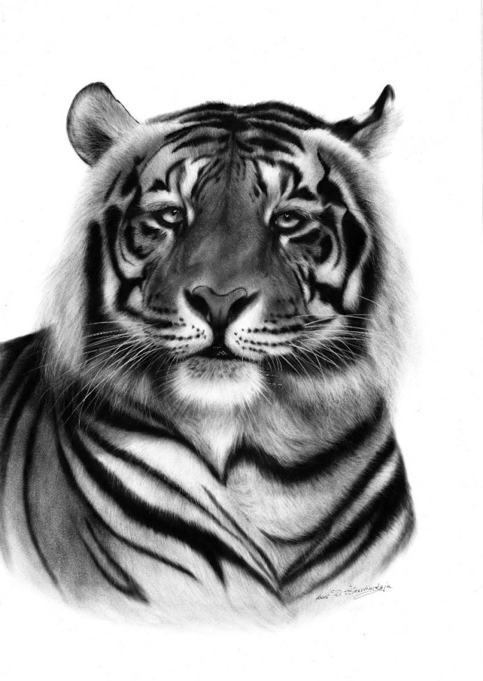 Tiger (Limited Edition Giclee Print)
