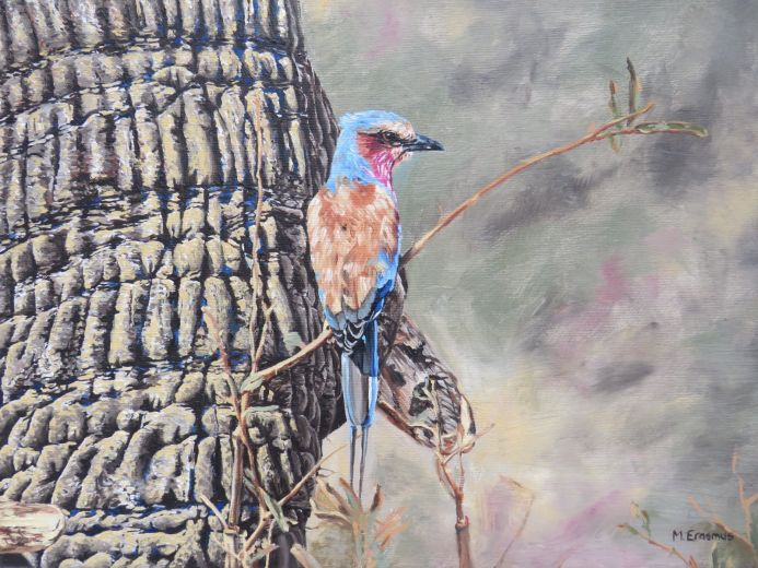 Lilac-breasted Roller & elephant
