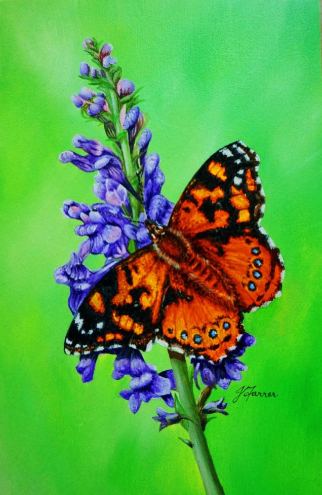 Painted Lady on Purple Toadflax 5x7.5inch