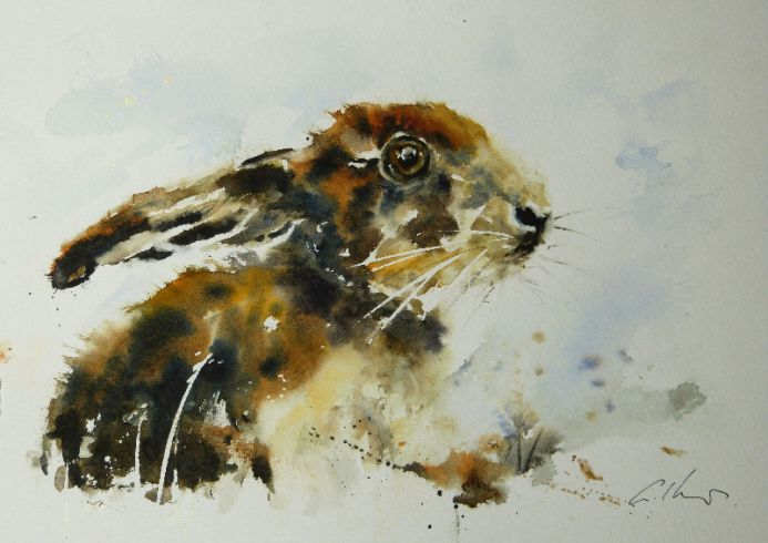 Young Hare.
